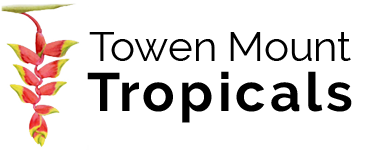 Towen Mount Tropicals