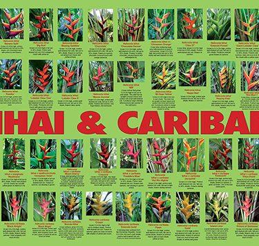 bihai-bihai-caribaeas-poster-web-504px