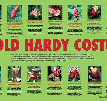 cold-hardy-costus-web-504px