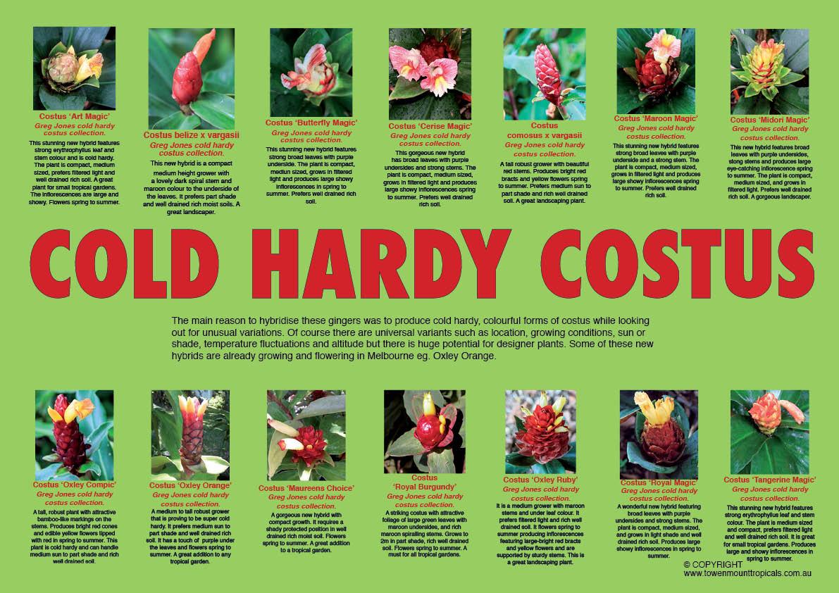 cold-hardy-costus-web