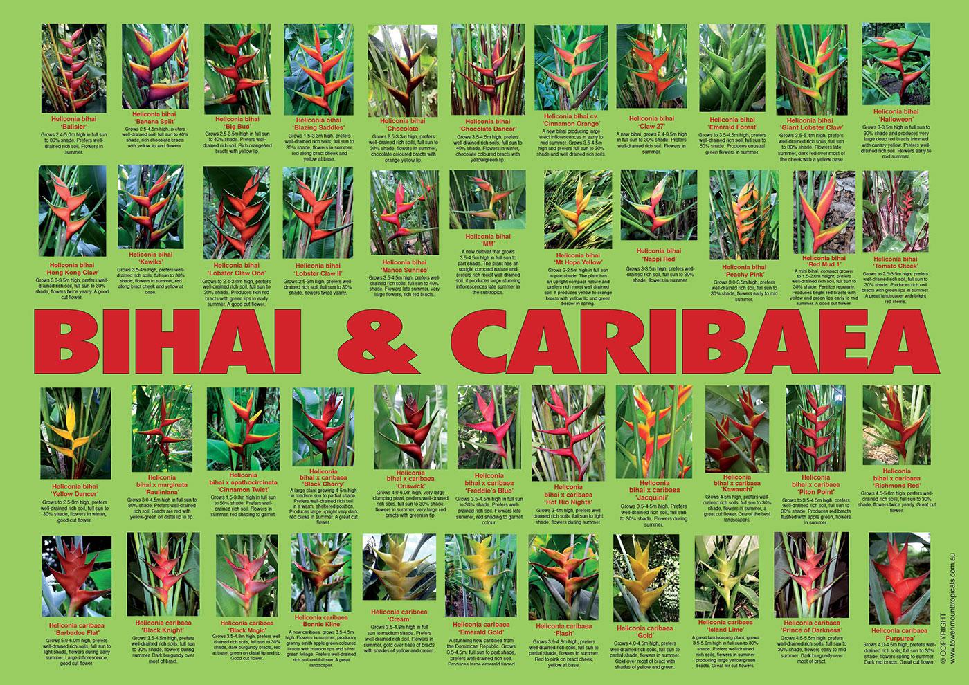 bihai-bihai-caribaeas-poster-web-1400px