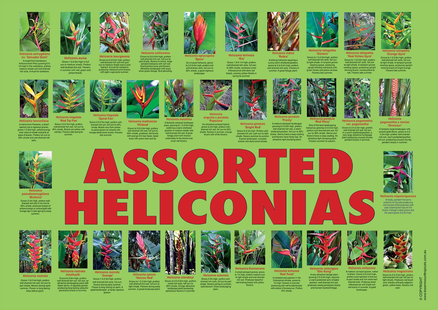 mischeliconia2-1400px
